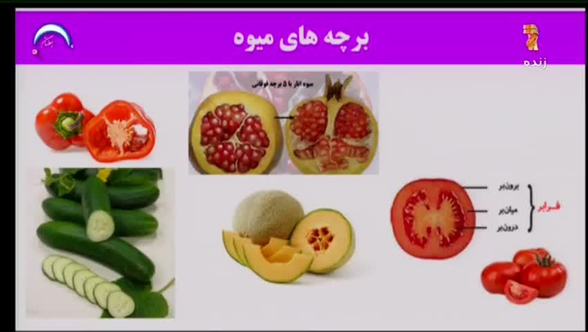 ویدیو آموزش فصل 8 زیست شناسی یازدهم بخش 2